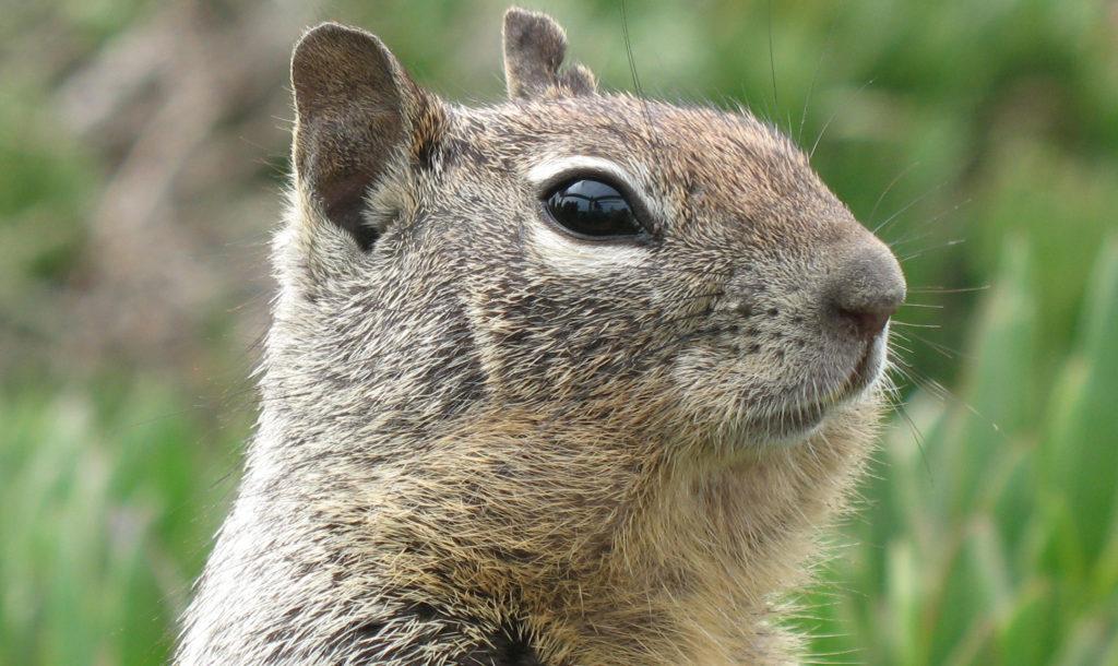 SquirrelInSanSimeon